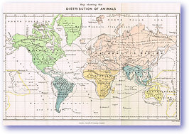 Distribution of Animals - 1888 (Our Earth and its Story - Vol 3 - Published: 1889) 600 DPI